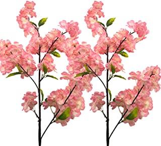 KirschblüTen Aus Japan MüNchen