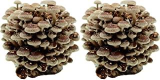 Frische Shiitake Pilze Zubereiten