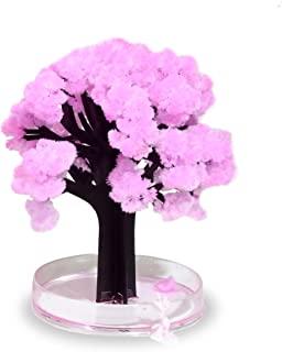 Sakura BäUme